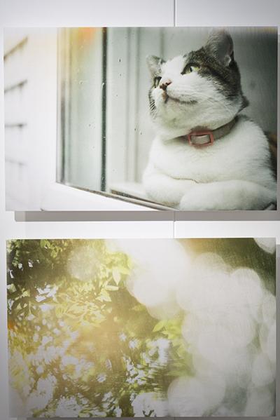 鈴木知子さんの写真展「365days」を見に BUKATSUDO へ。。。_d0154507_09134516.jpg