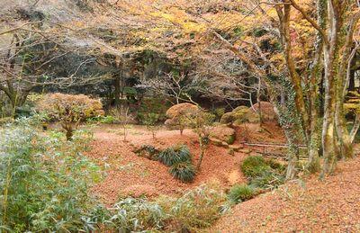 冬枯れの加満田庭園もまた良し_e0234016_17201158.jpg