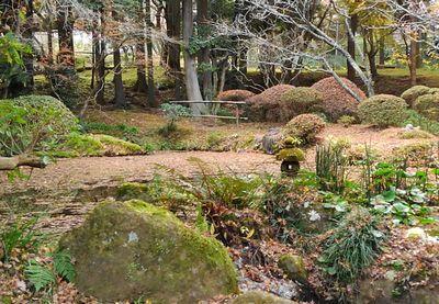冬枯れの加満田庭園もまた良し_e0234016_17204287.jpg