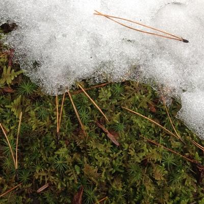 雪の庭園を歩けば_e0135219_1046348.jpg