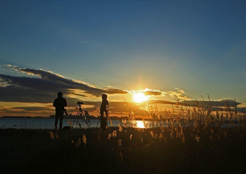 夕日のオオソリハシシギ_c0104227_00030334.jpg