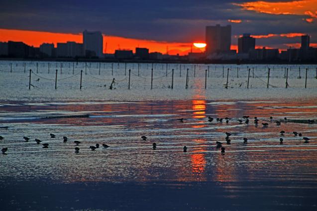 夕日のオオソリハシシギ_c0104227_00100262.jpg