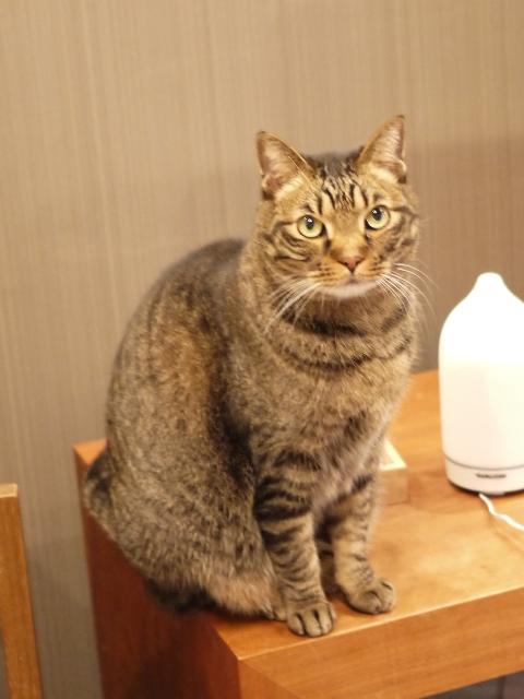 猫のお留守番 ララちゃん編。_a0143140_2122204.jpg