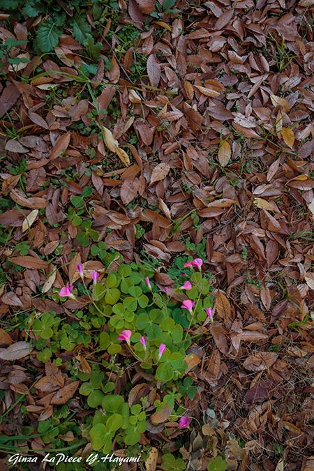 花のある風景 落葉 緑 花_b0133053_00395902.jpg