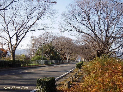 初冬の賀茂川 2016年12月18日_a0164068_21570843.jpg