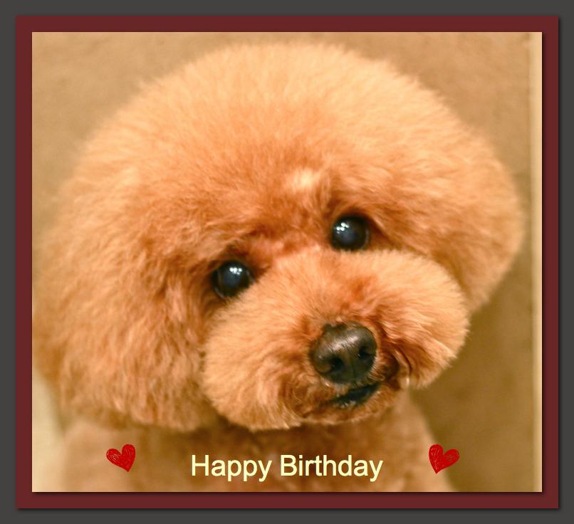 Happy Birthday♡プーくん&ププくん_d0060413_11350618.jpg