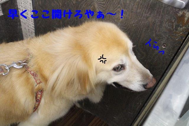 b0130018_817428.jpg
