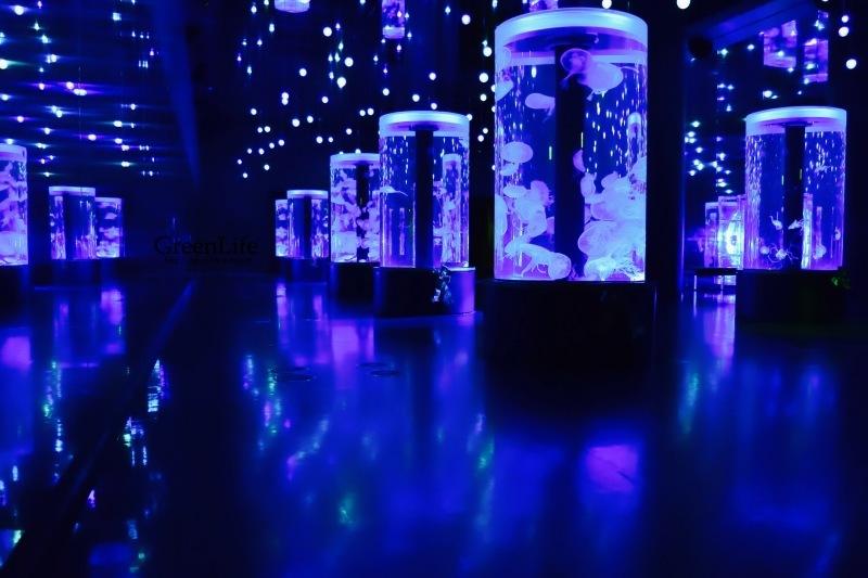 水族館Night♪_f0321522_09171341.jpg