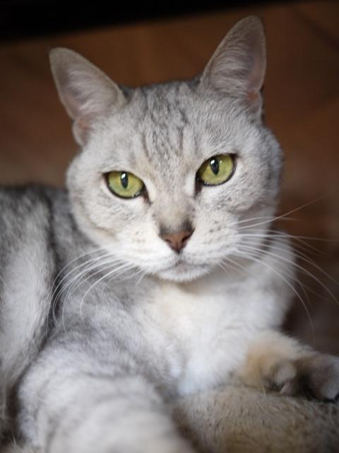 猫のお留守番 もっしゅちゃん編。_a0143140_19173267.jpg