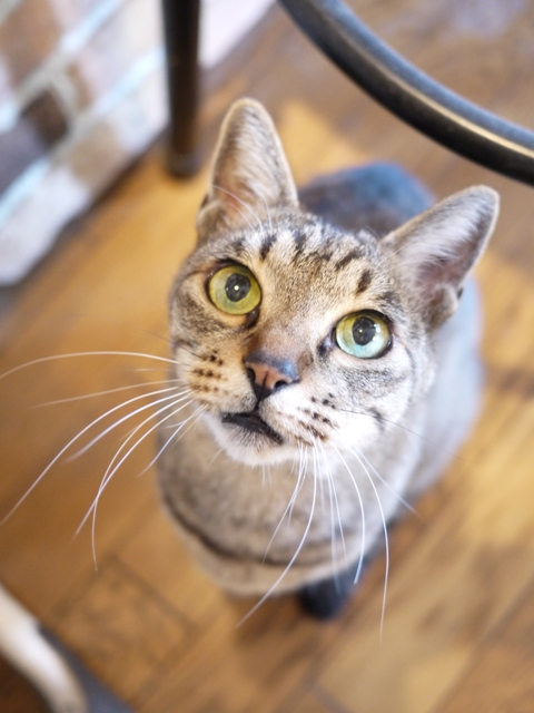 猫のお留守番 ジルちゃん編。_a0143140_19215397.jpg
