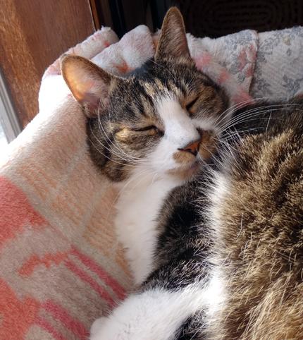 猫部屋のオキザリス、まだ緑のクッション~(^^ゞ_a0136293_176418.jpg