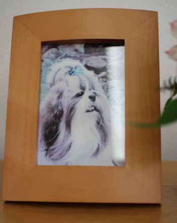 今日は「シャンディのキラキラ記念日」_c0090198_18343942.jpg