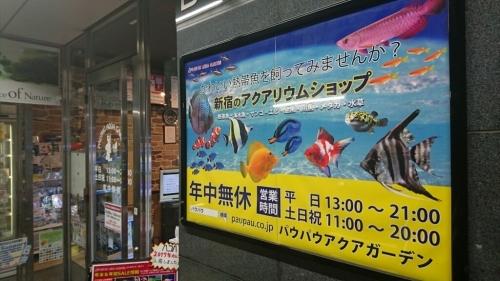 金魚コーナーが増えてる…_b0298605_00090881.jpg