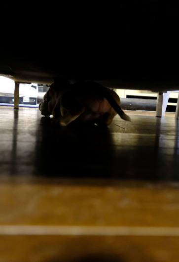 ソファーの下はハイパードライブスペース_b0310424_18323340.jpg