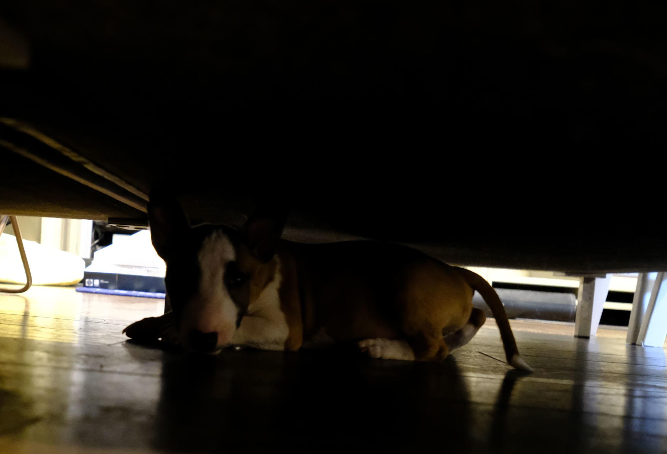 ソファーの下はハイパードライブスペース_b0310424_18323361.jpg