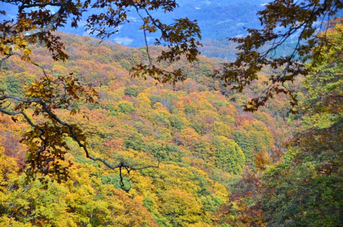 Shinetsu Trail Tour 2016 Oct 13 to Oct 23 [Part 4]_d0112928_07573920.jpg