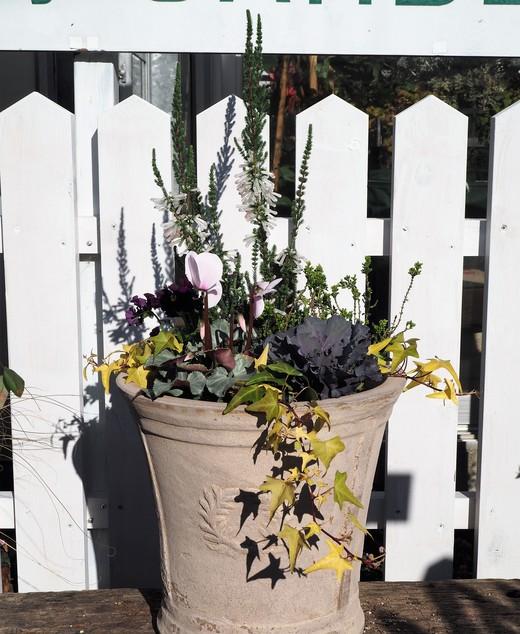 新春を寿ぐ寄せ植えを作りましょう!_f0139333_22345414.jpg