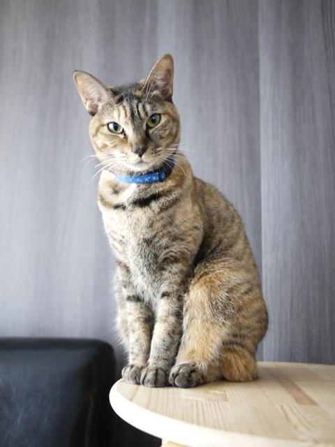 猫のお留守番 KEEちゃん編。_a0143140_194191.jpg