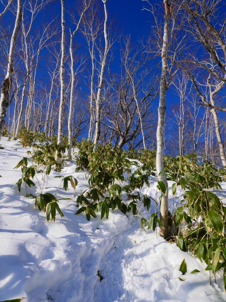 幌平山、12月19日_f0138096_12315452.jpg