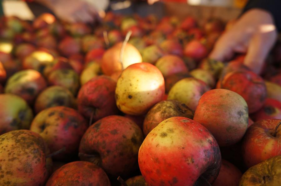 今年のリンゴは長く続く_f0106597_04284212.jpg