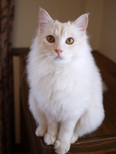 猫のお留守番 茶くん編。_a0143140_2201123.jpg