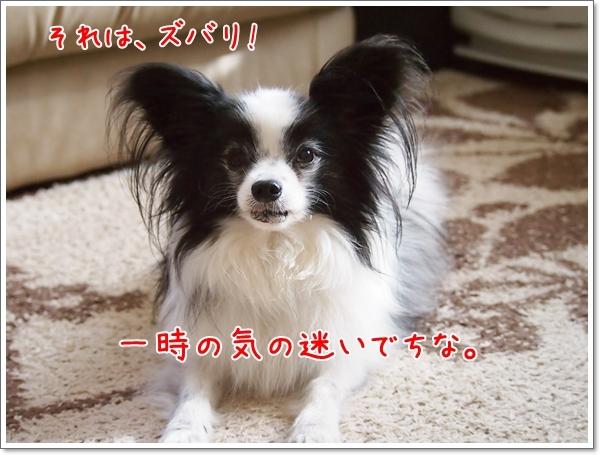 d0013149_00341557.jpg