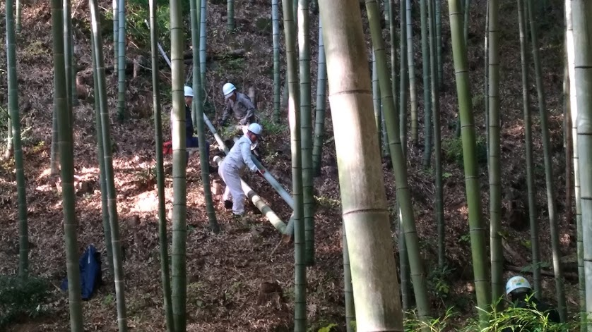 みさき里山クラブ:多奈川財産区「竹の里」で活動  by  (ナベサダ)_f0053885_2001130.jpg