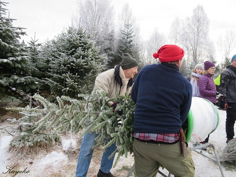 クリスマスツリー_a0353839_03214901.jpg