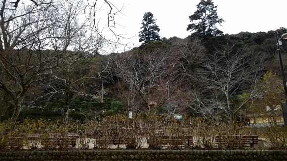 冬の箕面滝道_d0202264_13561488.jpg