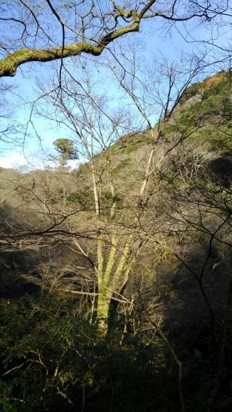 冬の箕面滝道_d0202264_13562819.jpg