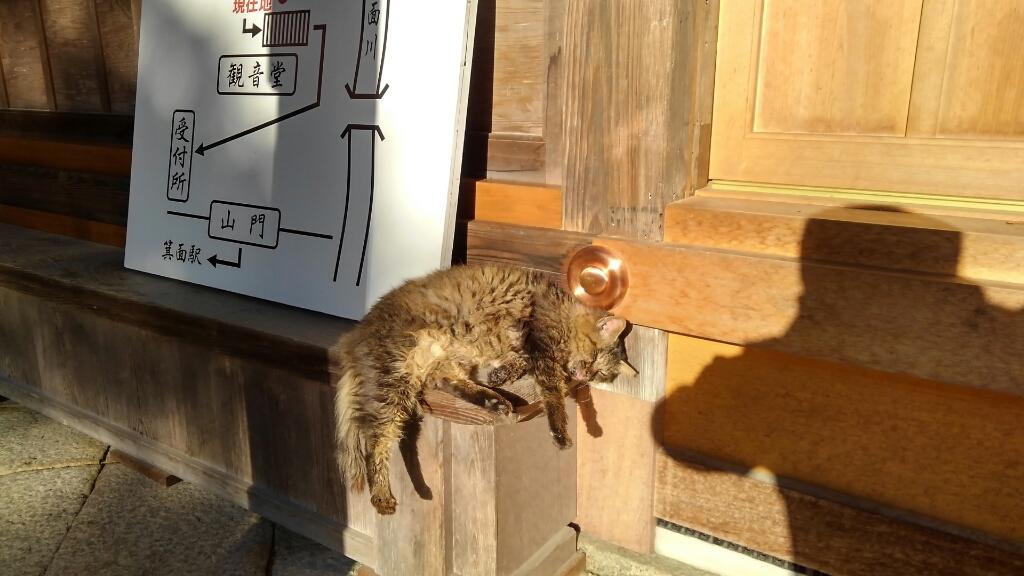 猫くん。箕面滝道にて_d0202264_18094255.jpg