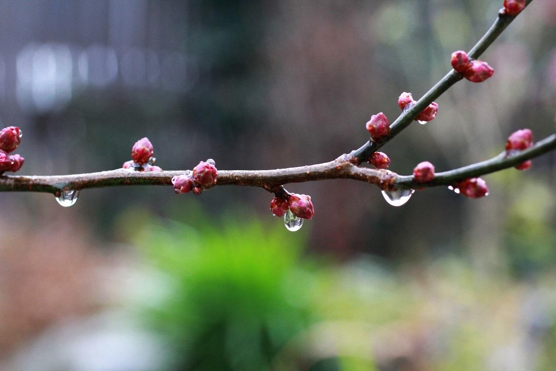憎まれっ子 世にはばかる  ~暖かな雨に打たれ~_a0107574_19281594.jpg