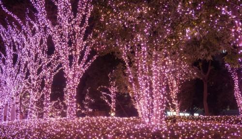 電飾で冬景色を_f0055131_11375917.jpg