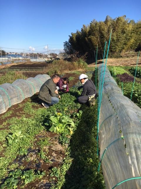 今朝はNさんご夫妻 Bさんが畑に参加・・飯田とで4人作業です_c0222448_11265860.jpg