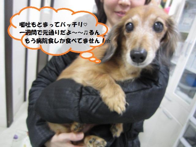 【ハナちゃんも膵炎!最近膵臓が悪い子が増えています】_b0059154_16322298.jpg