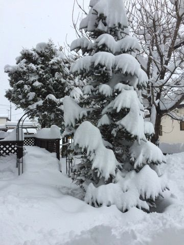 大雪!!とweb shopの年末年始のお知らせ♪_f0295063_12121877.jpg