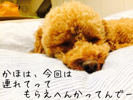 親子_b0370192_05322532.jpg