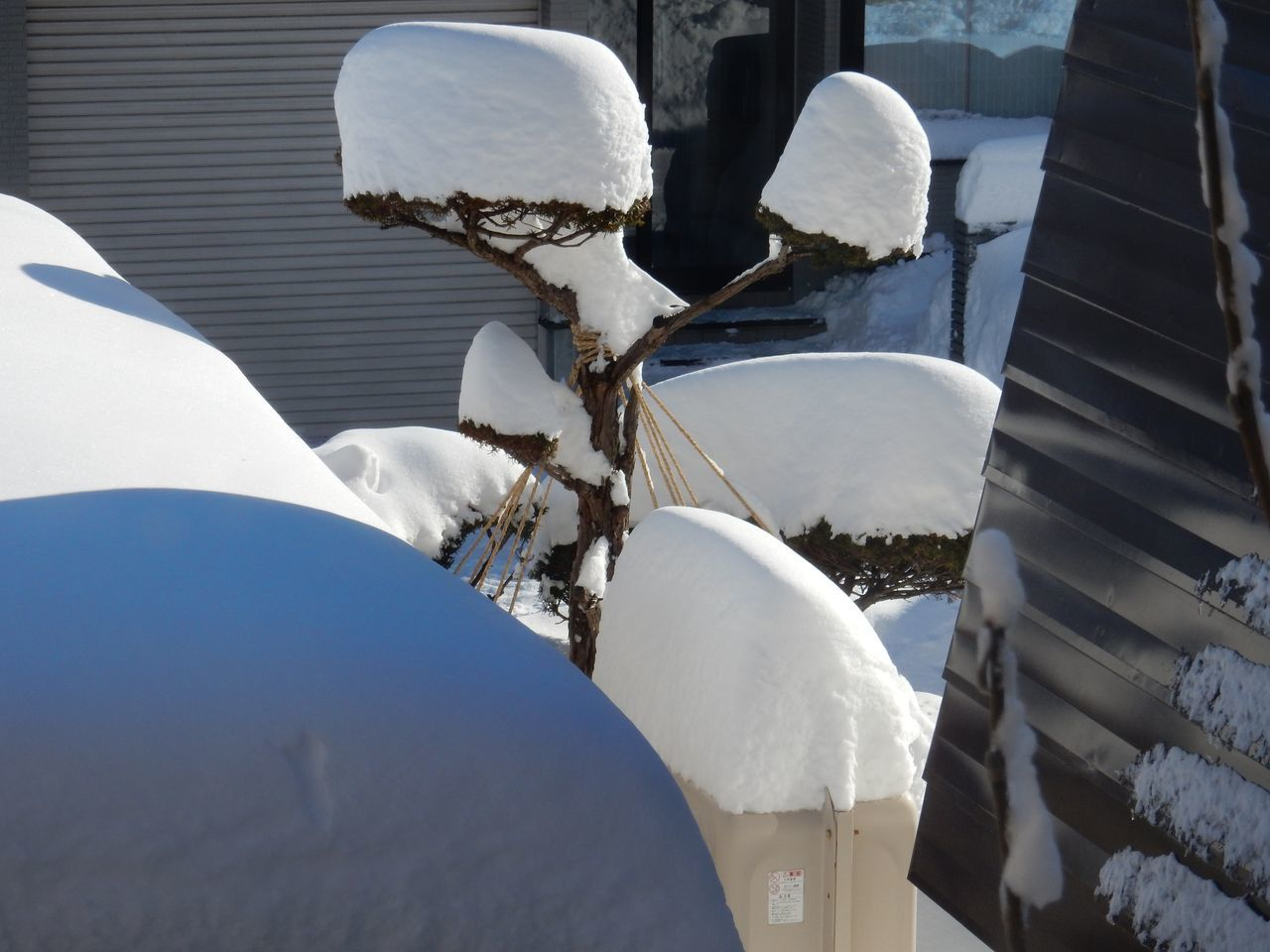 雪・雪・雪_c0025115_21154475.jpg