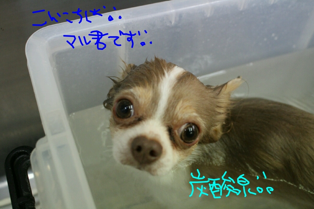 b0130018_20124934.jpg