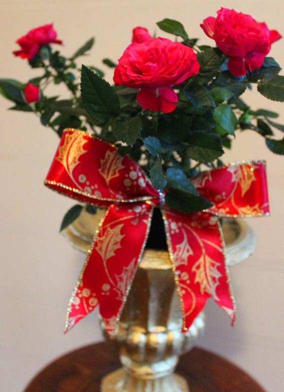 薔薇とリボンであしらうChristmas☆_a0329820_18482093.jpg