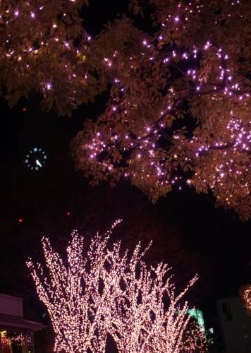 冬の夜桜_f0055131_1159212.jpg