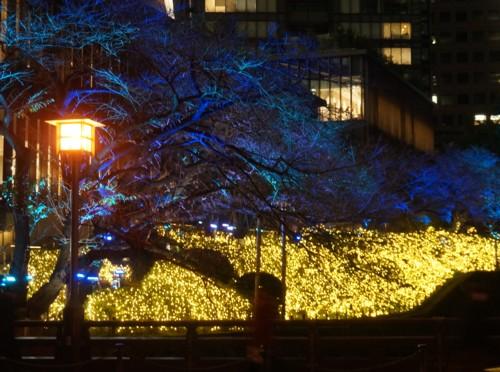 冬の夜桜_f0055131_11592823.jpg