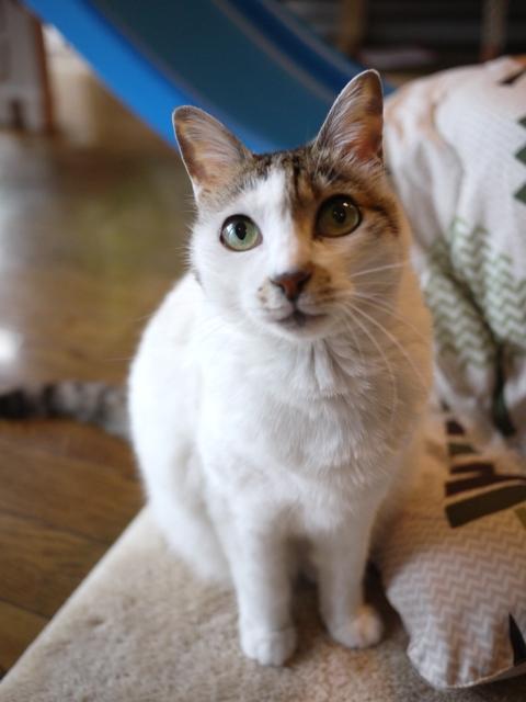 猫のお留守番 ちょりちゃん編。_a0143140_19435772.jpg