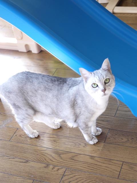 猫のお留守番 もっしゅちゃん編。_a0143140_19493374.jpg