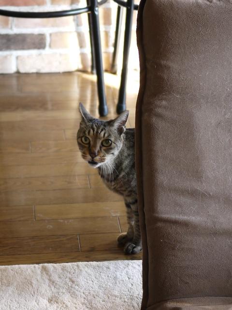猫のお留守番 ジルちゃん編。_a0143140_19522432.jpg