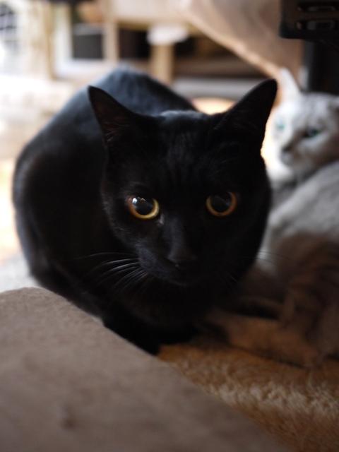 猫のお留守番 くろいのくん編。_a0143140_19592799.jpg