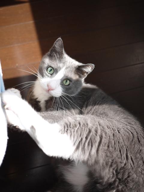 猫のお留守番 カン太くん編。_a0143140_2024884.jpg