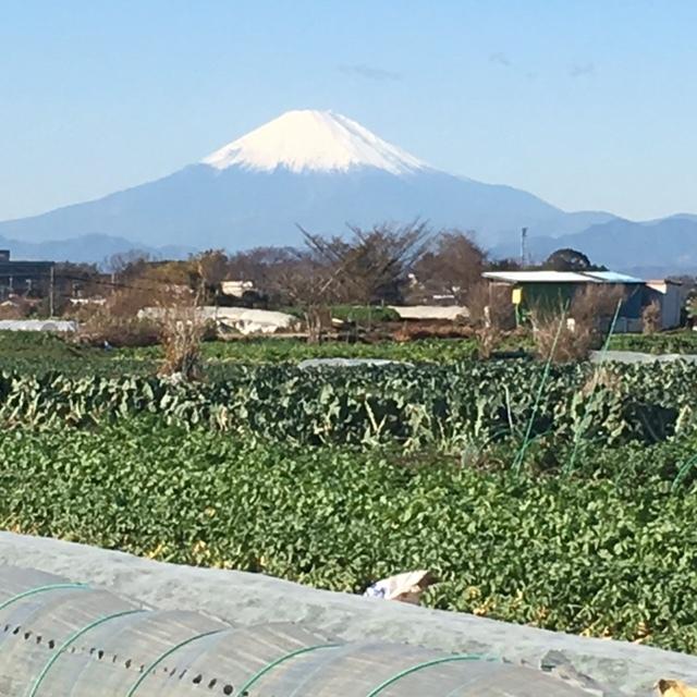 イブの朝 ジョイア畑空の風景 富士山がど~んとくっきり・・お出迎え!?_c0222448_11510473.jpg