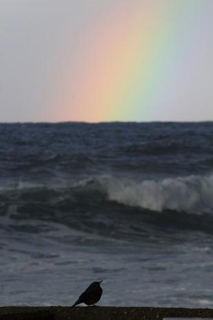 虹とイソヒヨドリ_c0155950_1492082.jpg