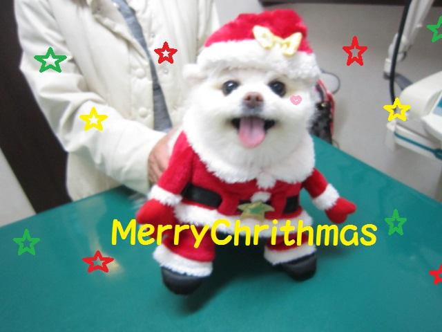 【メリークリスマスひなサンタだよ♡】_b0059154_1631842.jpg